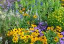 conocimiento de la biodiversidad vegetal