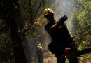 """Curso """"Desarrollo rural, gestión forestal y fuego…"""""""